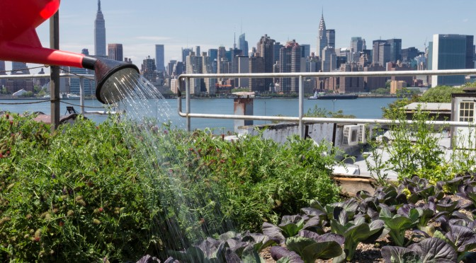 GLOBAL IMPORTANCE OF URBAN AGRICULTURE 'UNDERESTIMATED' - Executive Salad